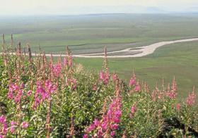 Arctic National Wildlife Refuge: PROTECTED (for now)