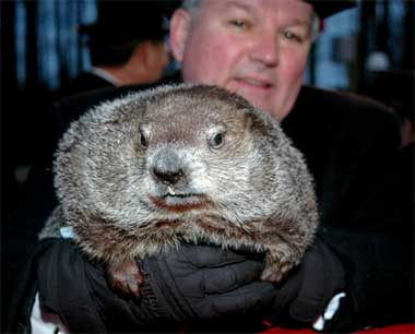 Punxsutawney Phil - the wise groundhog who has been making predictions for over 120 years!